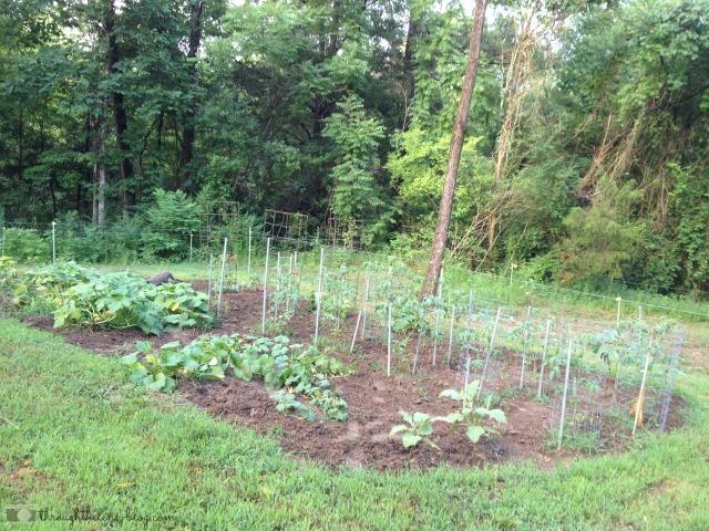 Gardening_6