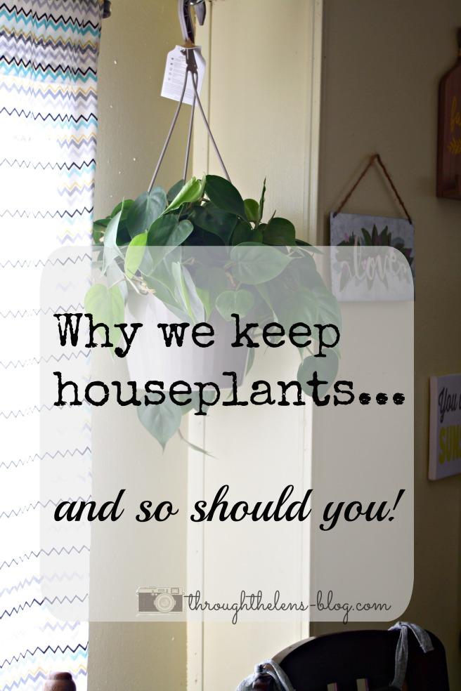Houseplants.jpg